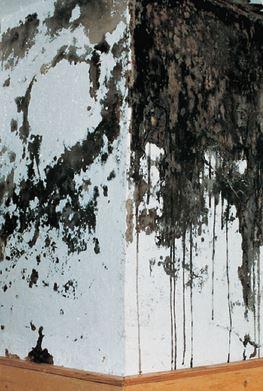 Kamini & Otvorena ložišta: Čvrsta goriva&gas